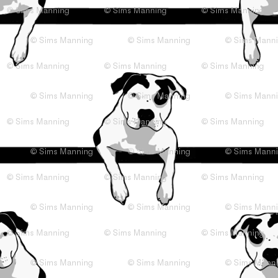 Pit-bull-t-bone-graphic-smaller_preview