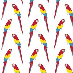 parrot pattern-small