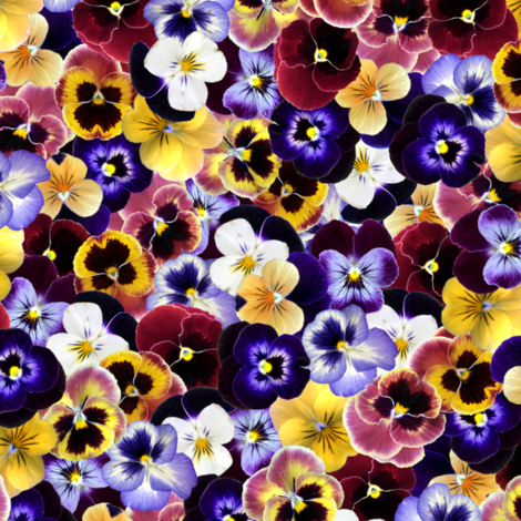 Pansy Field fabric by sammichsewing on Spoonflower - custom fabric