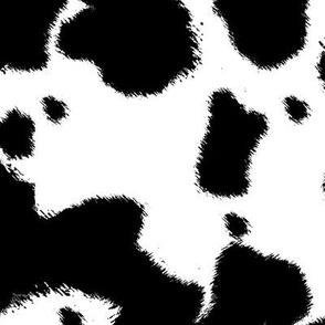 Black Longhorn Cow Spots