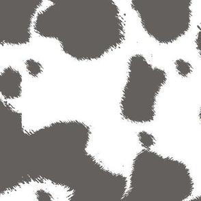 Gray Longhorn Cow Spots