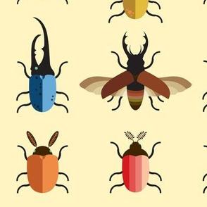 Victorian Beetle Entomology