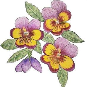 Purple Yellow Pansies