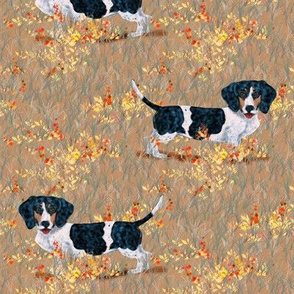Piebald Dachshund in Wildflower Field