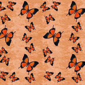 Orange Swallowtail Butterflies