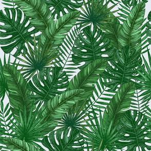 wild tropics