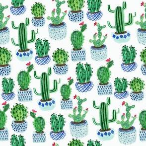Cactus potplants  - white