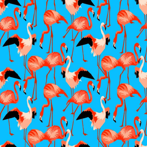Flamingo Orange on Blue Water