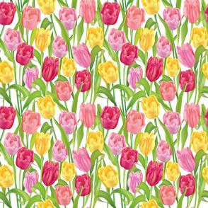 My Tulip Garden on White