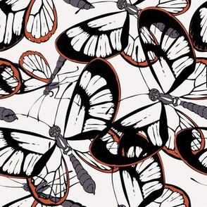 Exotic Glass Butterflies