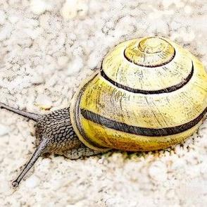 Snail on stones