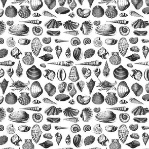 Vintage shell black and white seamless pattern