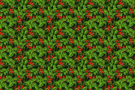 dogrose_seamless_crop5save_dd fabric by ilonitta on Spoonflower - custom fabric