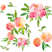 peaches and peonies