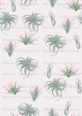 airplant_03