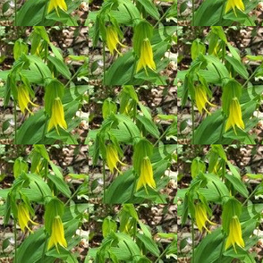 Bellwort Lily