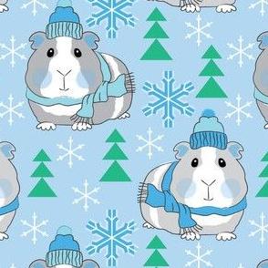 winter guinea pigs on blue