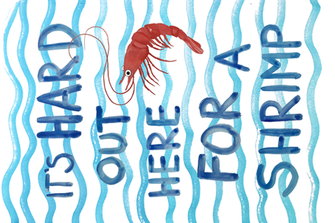 hard out here for a shrimp  fabric by dasbrooklyn on Spoonflower - custom fabric