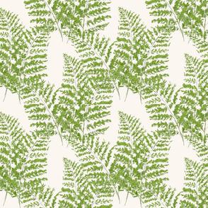 Hand-drawn  Feathery Ferns on ivory