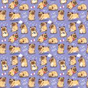 Pugs puppies_2