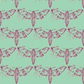 Moths 5