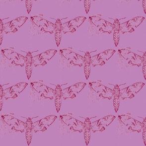 Moths 6