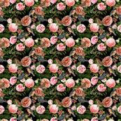 Enchanting Camellia & Kingfishers on black