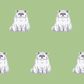 Persian cat pattern