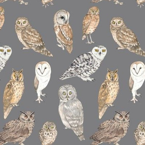 Owls of the world on grey