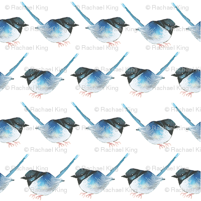 Bluebird Lines