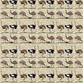 Flightless birds 4 x 5.33