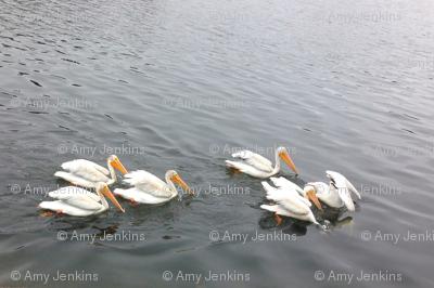 pelicansfatquarter