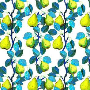 Pear Garden Pears Fruit Blue Green Yellow Citrus Garden