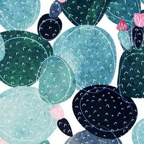 cactus rosettes