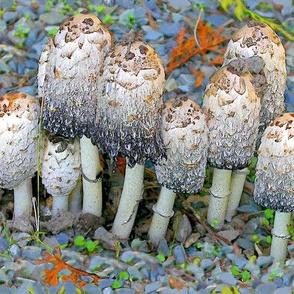 Mushroom Group .
