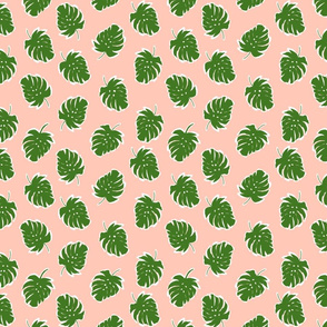 Green and Pink Monstera