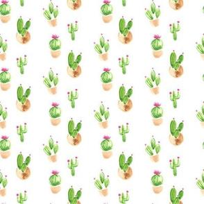 Cacti/cactus 4