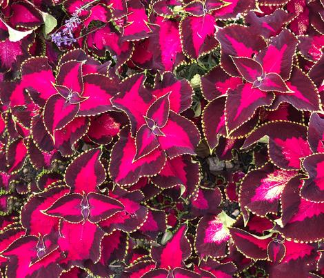 FF207136-3BE6-49B2-B604-278F86AE0308 fabric by nikola_foster on Spoonflower - custom fabric