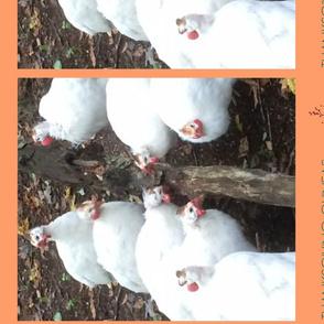 peach thanksgiving guineas tea towel