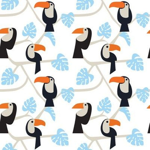 Toucans on white