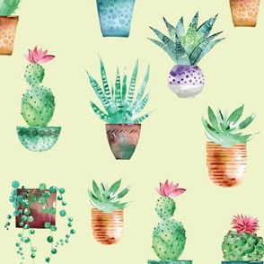 Watercolor cactus and succulents in the pots