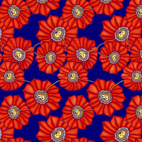 Red sunflower on blue