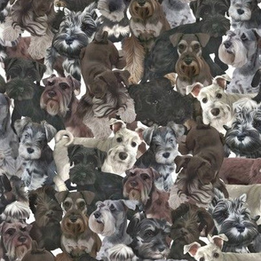 Schnauzer Collage Realistic Small Light