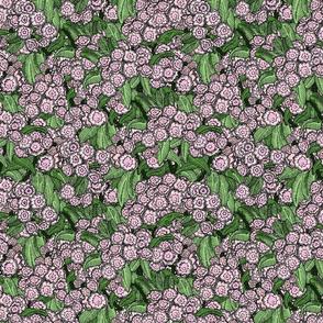 Pink Mountain Laurel
