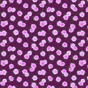 Pink Callies on Plum Medium