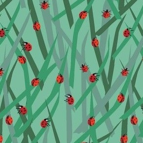 Lady Bugs in the Grass
