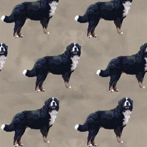 Berner Sennenhund Muster schlammfarben