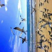 Rrrlaughing_gulls_tea_towel_2_shop_thumb