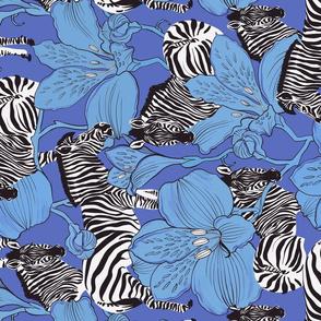 zebras blue rotate