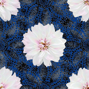 White dahlia on black lace (blue) midium